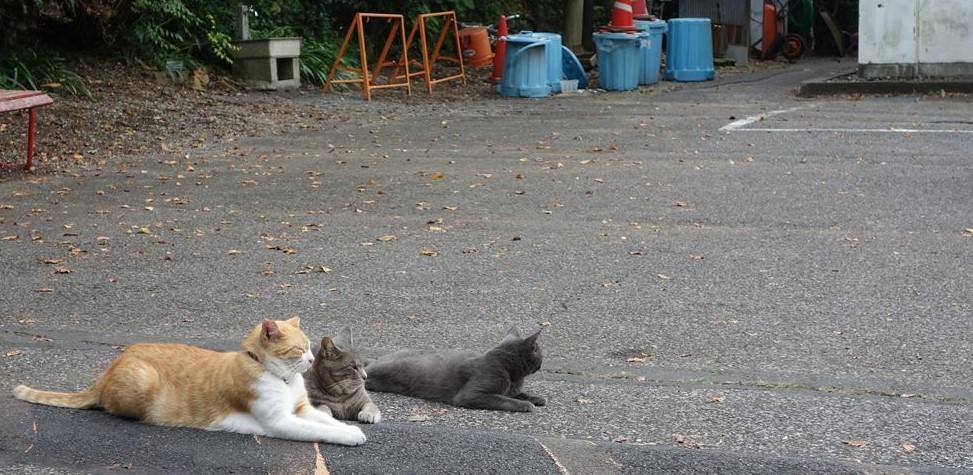 【佐野】唐沢山にポケモンを探しに行ったら猫の方が多かった