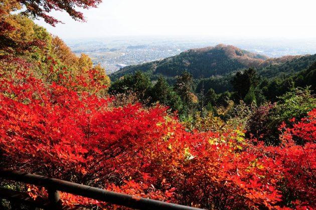 大平山の紅葉