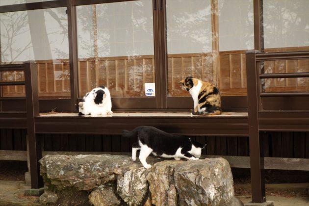 唐沢山の猫