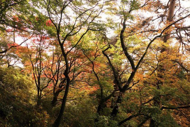 唐沢山の紅葉写真5