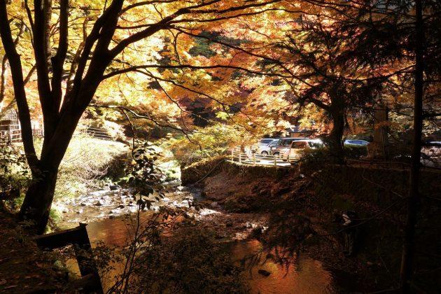 蓬莱山の紅葉写真6