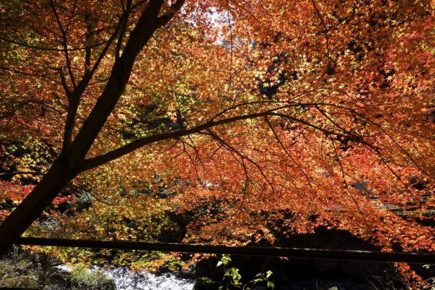 蓬莱山の紅葉写真1