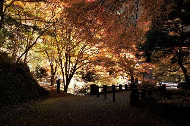 蓬莱山の紅葉写真3