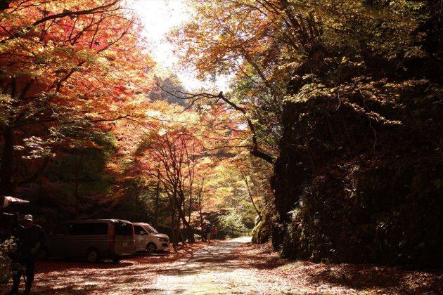 蓬莱山の紅葉写真8