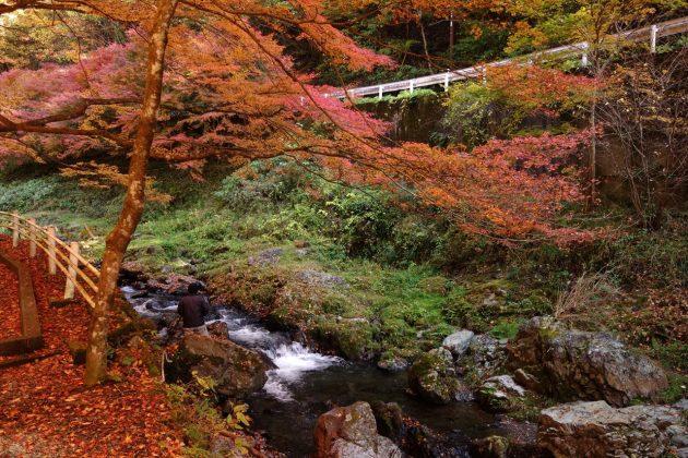 蓬莱山の紅葉写真5