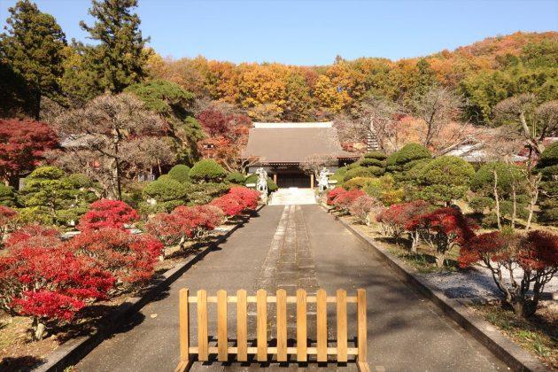 金蔵院の紅葉写真7