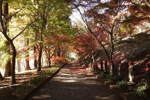 金蔵院の紅葉写真1