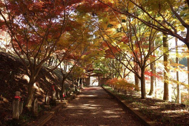 金蔵院の紅葉写真3