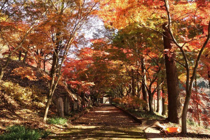 金蔵院の紅葉写真