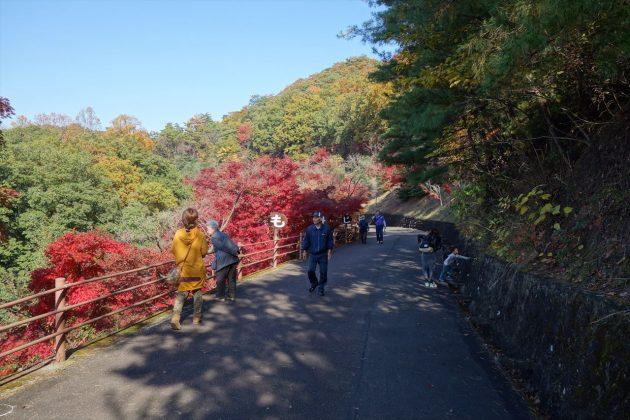織姫公園ともみじ谷の紅葉写真2