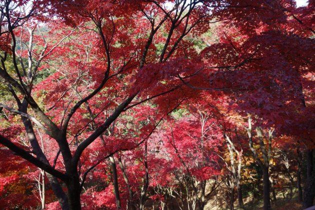 織姫公園ともみじ谷の紅葉写真3