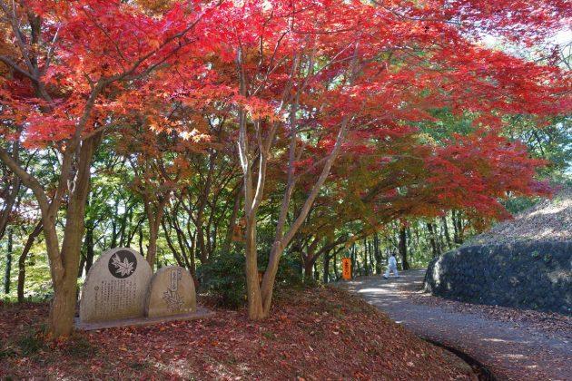織姫公園ともみじ谷の紅葉写真4