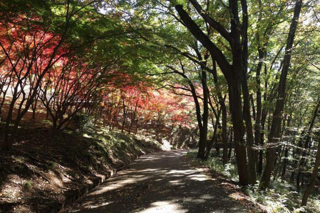 織姫公園ともみじ谷の紅葉写真5