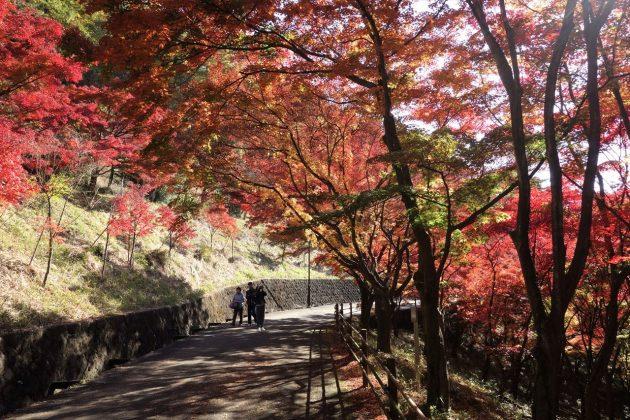 織姫公園ともみじ谷の紅葉写真6