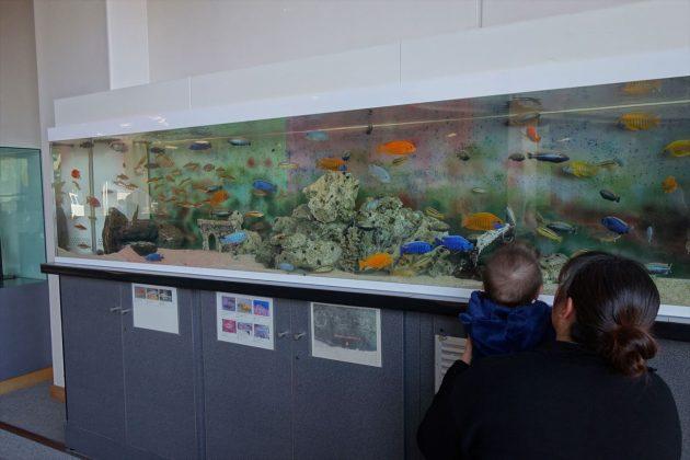 佐野市こどもの国の熱帯魚の水槽
