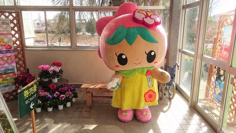 【栃木市】とちぎ花センターで「秋のフラワーフェスティバル」が開催されます