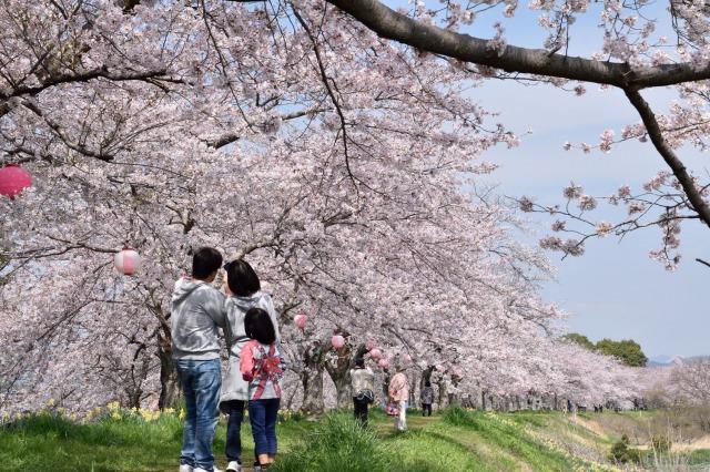 【栃木市】金崎のさくらまつりが開催されます