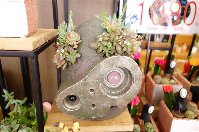 ラピュタのロボットと多肉植物
