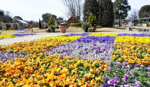 冬時期のあしかがフラワーパークはどんな花が見られるの?2月の見所をチェック