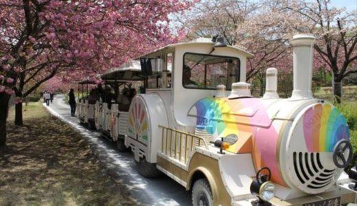 下野市で開催される「天平の花まつり」の時期や料金をチェック!