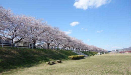 佐野市の桜の名所「秋山川の桜堤」を紹介します!写真や見頃時期をチェック