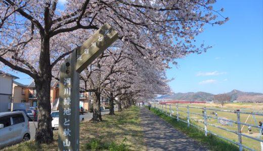 佐野市の桜の名所4選!地元民が選ぶオススメの花見スポットを紹介します
