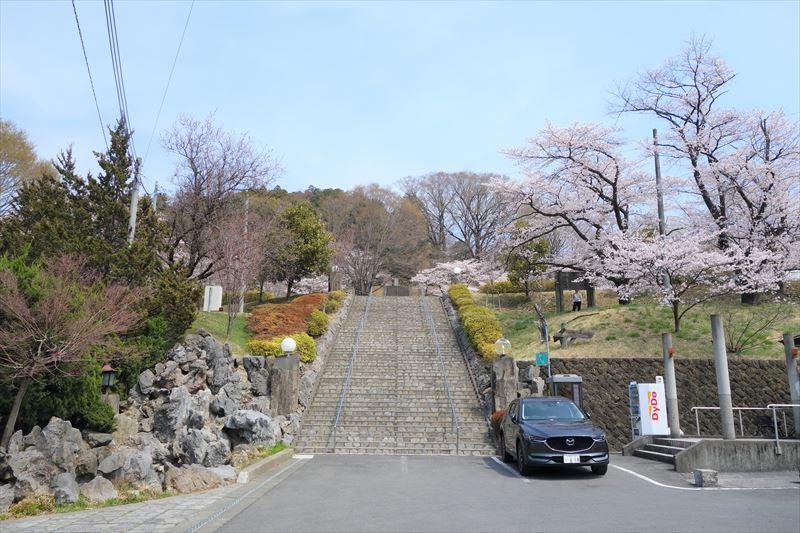 嘉多山公園の桜(南側の入口)