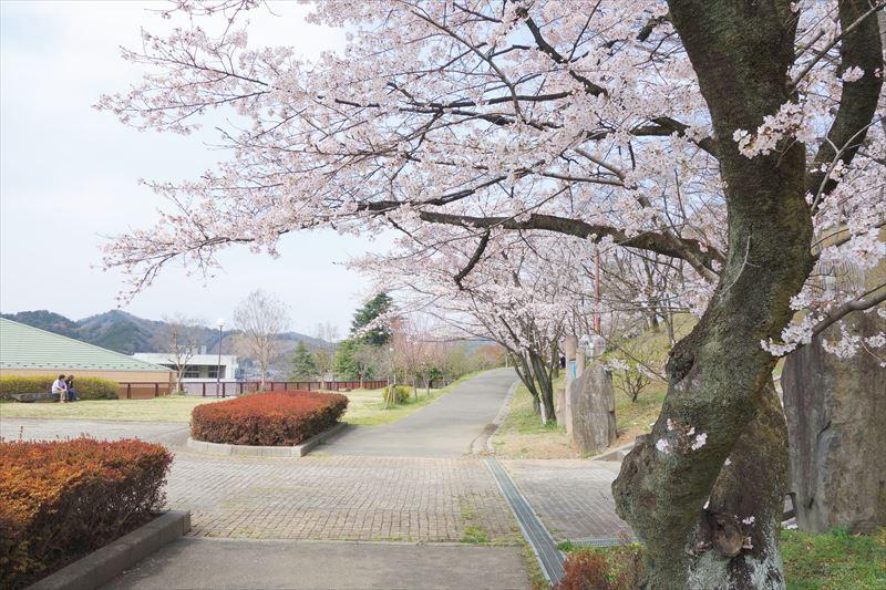 嘉多山公園の桜(遊具へ続く道)