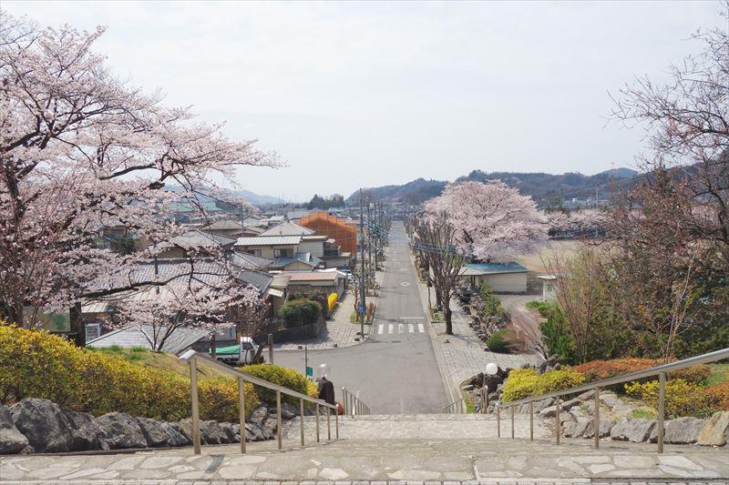 嘉多山公園の桜(広場から見下ろした写真)