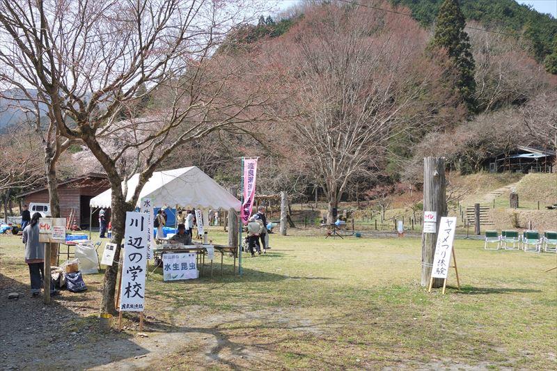 秋山のしだれ桜祭りの様子