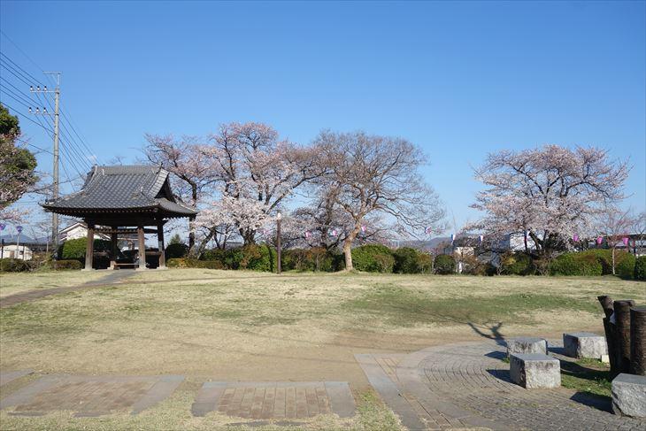 城山公園の桜と広場