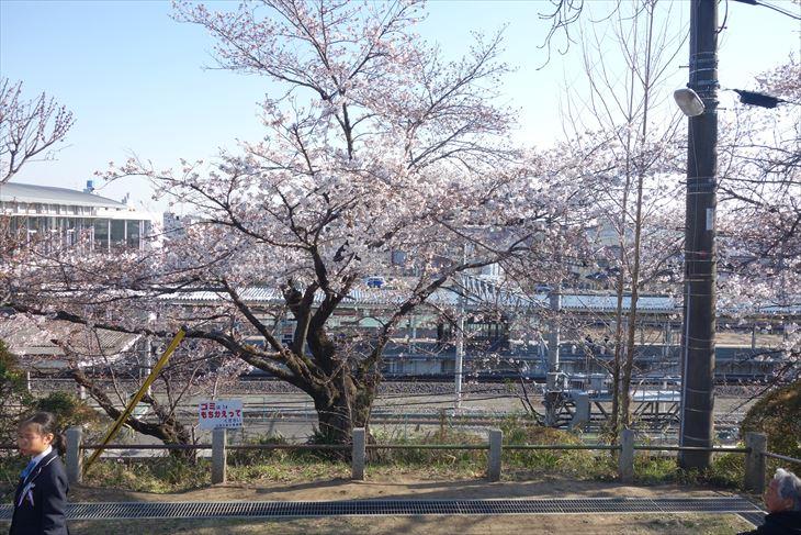 城山公園から見る桜と電車