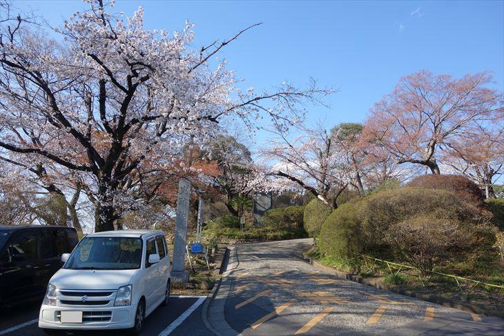 城山公園の桜(入口)