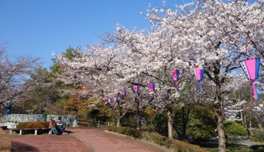 佐野市の桜の名所「城山公園」を紹介します!写真や見頃時期をチェック