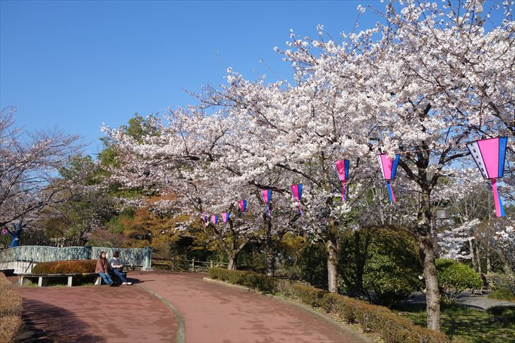 城山公園の桜(池周辺)