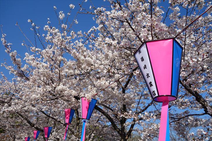 城山公園の桜(満開)