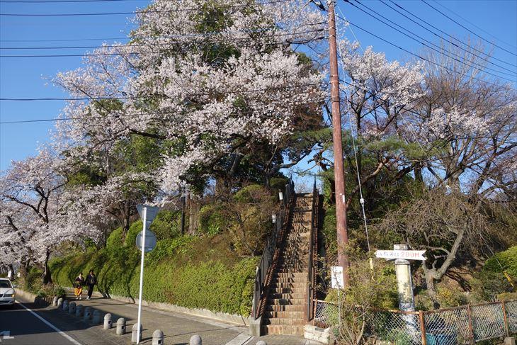 城山公園の桜(西側)