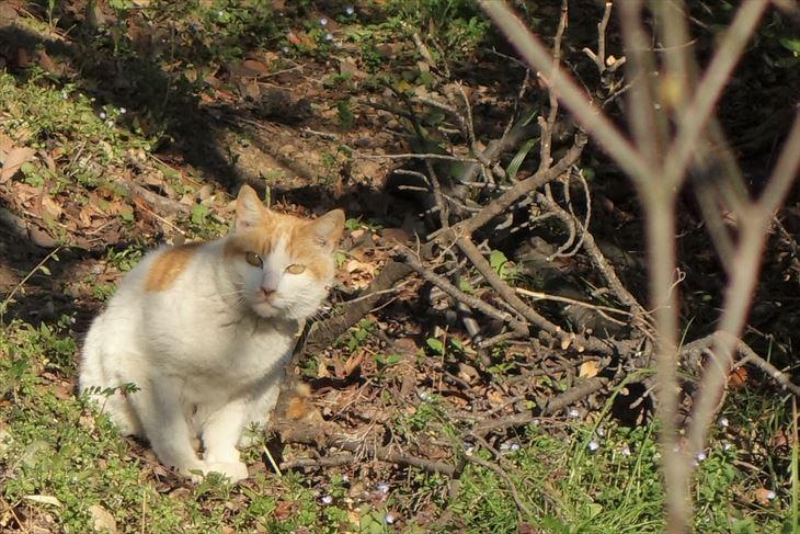 城山公園の猫