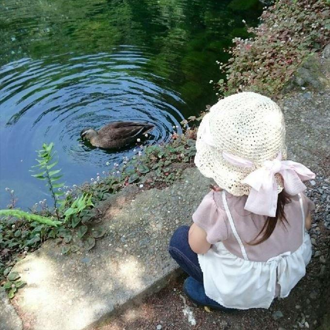 出流原弁天池と鴨