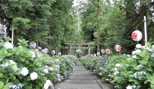 鹿沼市で開催される「磯山神社あじさい祭り」の開催時期や内容をチェック