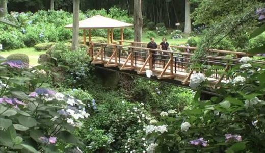 大田原市で開催される「くろばね紫陽花まつり」の開催期間や内容をチェック!