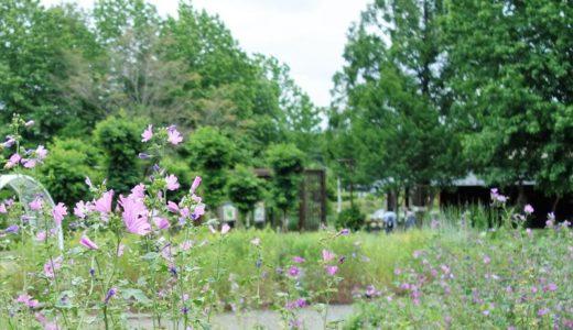 みかもハーブ園|40種類のハーブが楽しめる「みかも山公園」の癒しスポット