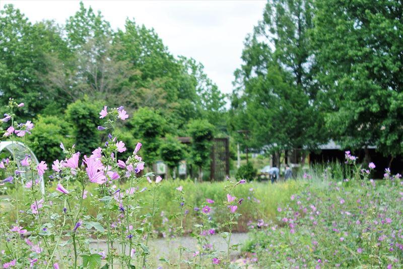 みかもハーブ園の花々