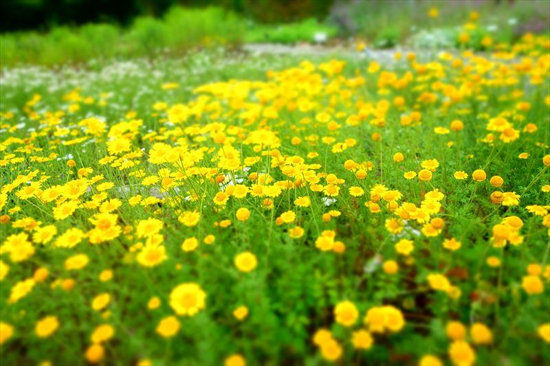 みかもハーブ園の花々2