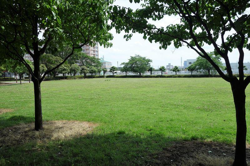 朱雀中央公園の芝生広場