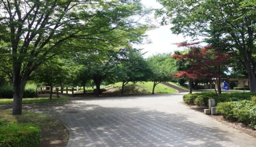 【公園レポ】朱雀中央公園|春には花見!夏にはちょっとした水遊びができる公園