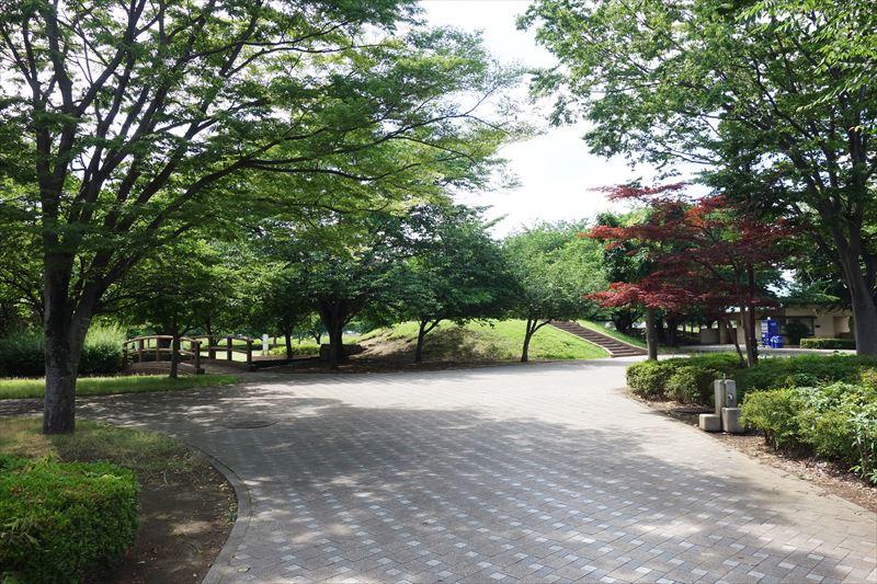 朱雀中央公園の木々