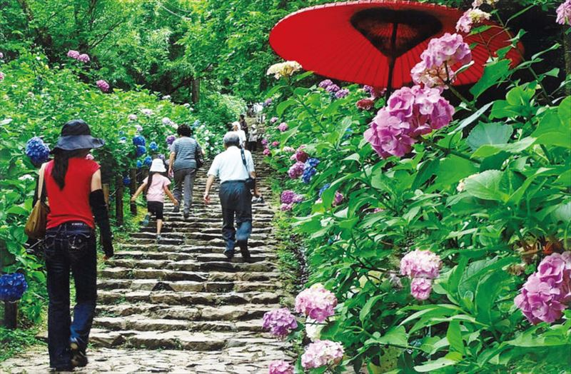 栃木市の太平山あじさい坂「とちぎあじさいまつり」