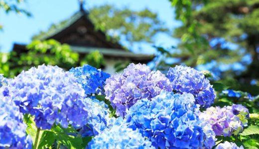 栃木県の「あじさいの名所」と「あじさい祭り」をまとめてみました!