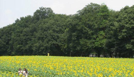 上三川町で開催される「かみのかわサンフラワー祭り」の開催日と内容、行った人の感想をチェック